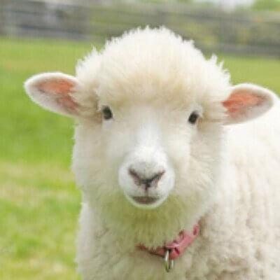 羊と鼠先生